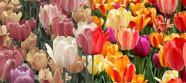 Imagen de colores naturales con XR Triluminos PRO™