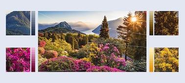 Imágenes de flores de montaña ultradetalladas con XR HDR Remaster